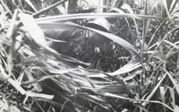Mayito (Mario García Joya) #157. NFS> Untitled, N.D. 8.75 x 14.75 inches