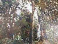 """Marucha (María Eugenia Haya) #1. NFS> """"Sol de mediodia,"""" N.D. Print #1.  10.75 x 15.5 inches."""