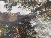 "Marucha (María Eugenia Haya) #3. ""Sol de mediodia,"" N.D. Print #3.  10.75 x 15.5 inches."