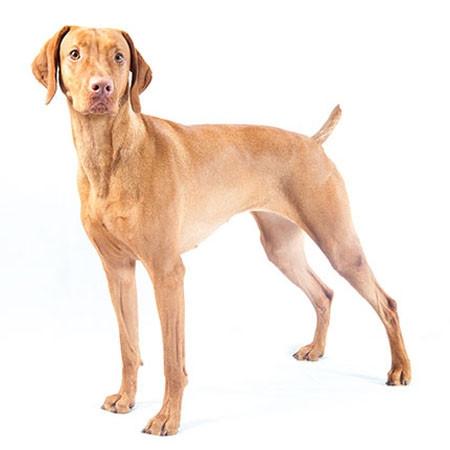 Dog Breeds - DOGMASTER