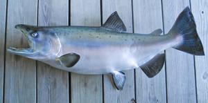 King Salmon fiberglass fish replica