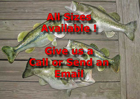 Many Sizes Available - Bass