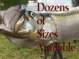 Many Sizes of Tarpon available