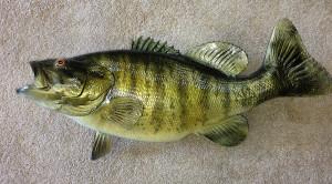 Smallmouth Bass replica