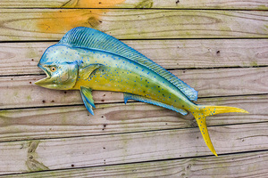 Mahi Mahi, Dorado, Dolphin fiberglass replica