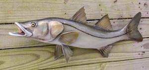 Snook fiberglass fish replica