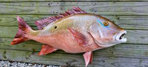 Mutton Snapper fiberglass fish replica