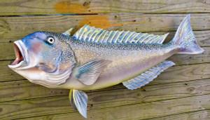 Tilefish fiberglass fish replica