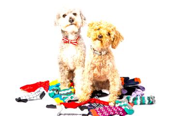 posieturner-inspiring-womens-socks-sale.jpg