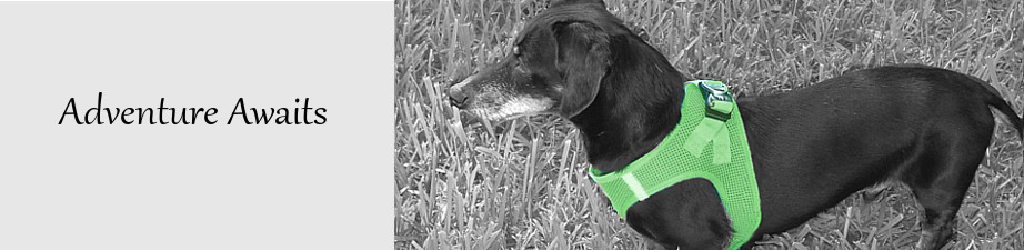 harness-black-white-green.jpg
