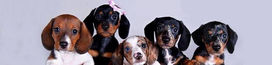 new-arrivals-puppies-4-no-text.jpg