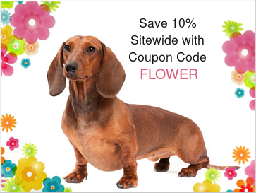 spring-flower-coupon-border-size-2.png