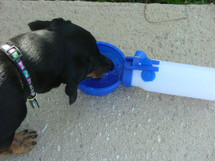 Dachshund Water Rover Portable Drinking Bowl