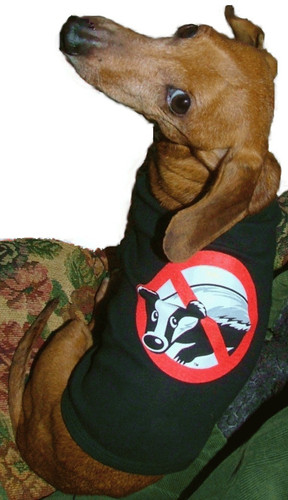 Badger Busters Dachshund Dog Tank