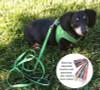 Dachshund Plush No Choke Dog Harness
