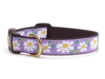 Daisy Floral Dog Collar