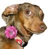 Dog Silk Collar Flowers