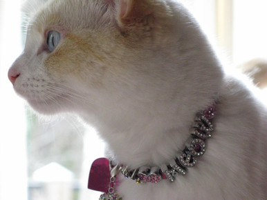 Personalized Leather Cat Collars with slide rhinestone letters and charms