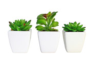Set of Three (3) Decorative Faux Succulent Potted Plants in White Ceramic Pots
