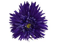 Blue daisy double hair flower clips