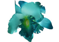Blue orchid double hair flower clips