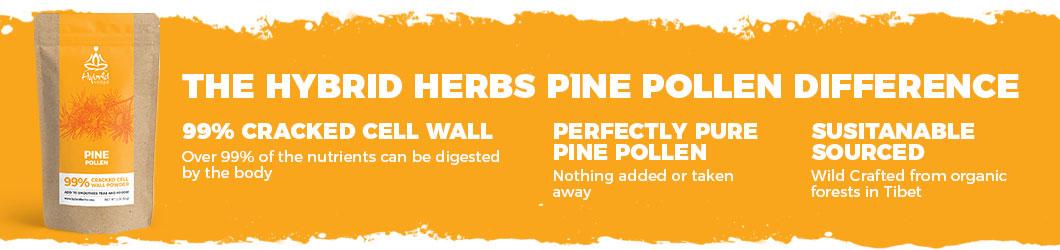 pine-pollen-powder-difference.jpg