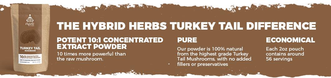 turkey-tail-powder-difference.jpg