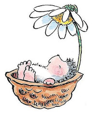 Baby Hedgehog In A Nutshell, Wood Mounted Rubber Stamp PENNY BLACK - NEW, 1754H