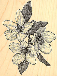 Crab Apple Wood Mounted Rubber Stamp Impression Obsession  Aislinn Adams New