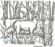 Deer In Wooded Forest Wood Mounted Rubber Stamp Northwoods Rubber Stamp New