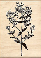 Flower Blossoms Stem Wood Mounted Rubber Stamp Brenda Walton by Inkadinkado NEW