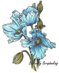 Himalayan Poppy Flowers Cling Unmounted Rubber Stamp C.C. Designs JD1014 New