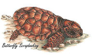Sea Turtle Beach Stamp Cling Unmounted Rubber Stamp C.C. Designs JD1009 New