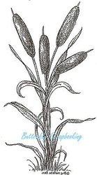 Tall Cattail Bundle Wood Mounted Rubber Stamp Northwoods Rubber Stamp New