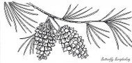White Pine And Cones, Wood Mounted Rubber Stamp New NORTHWOODS - O7149