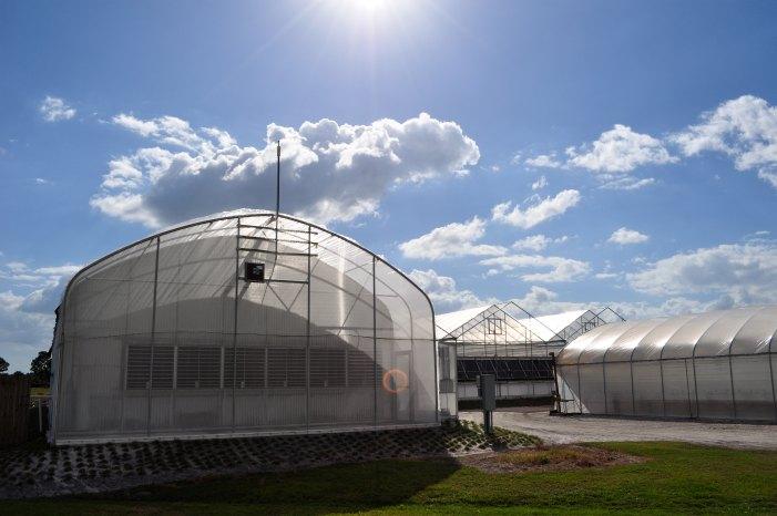 big-bad-flower-greenhouses.jpg