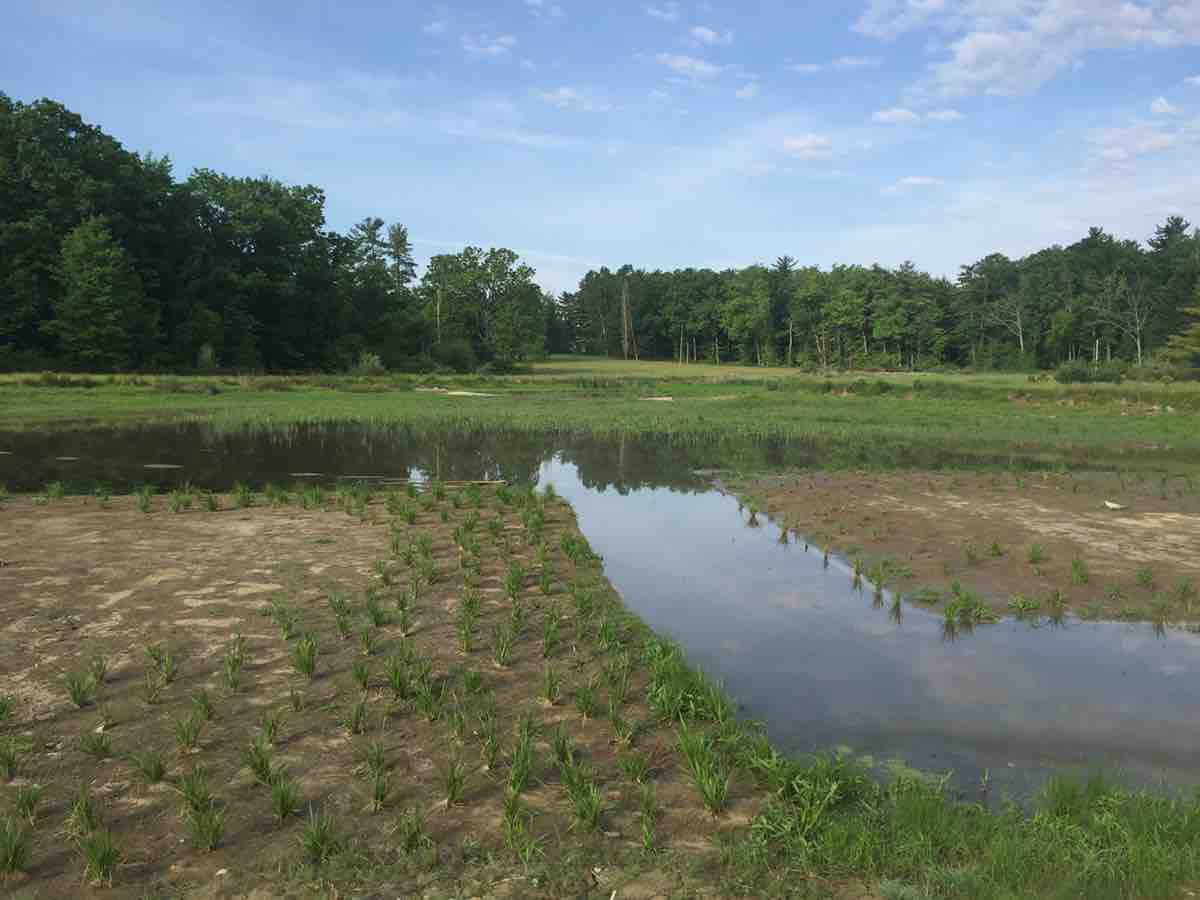 wetland restoration contractor in PA