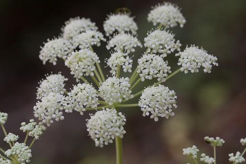 25 Fun Flower Facts Albuquerque Florist
