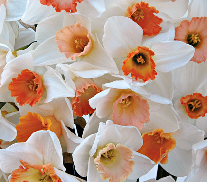 The Birth Flower For March Albuquerque Florist