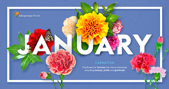 January Birth Flower Carnation Albuquerque Florist