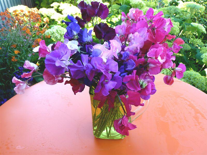 The Birthflower For April Albuquerque Florist