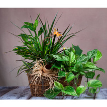 ABQ Florist Signature Wicker Planter