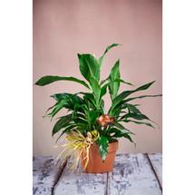 ABQ Florist Signature Terracotta Planter