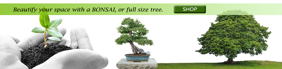 limited space? grow a bonsai