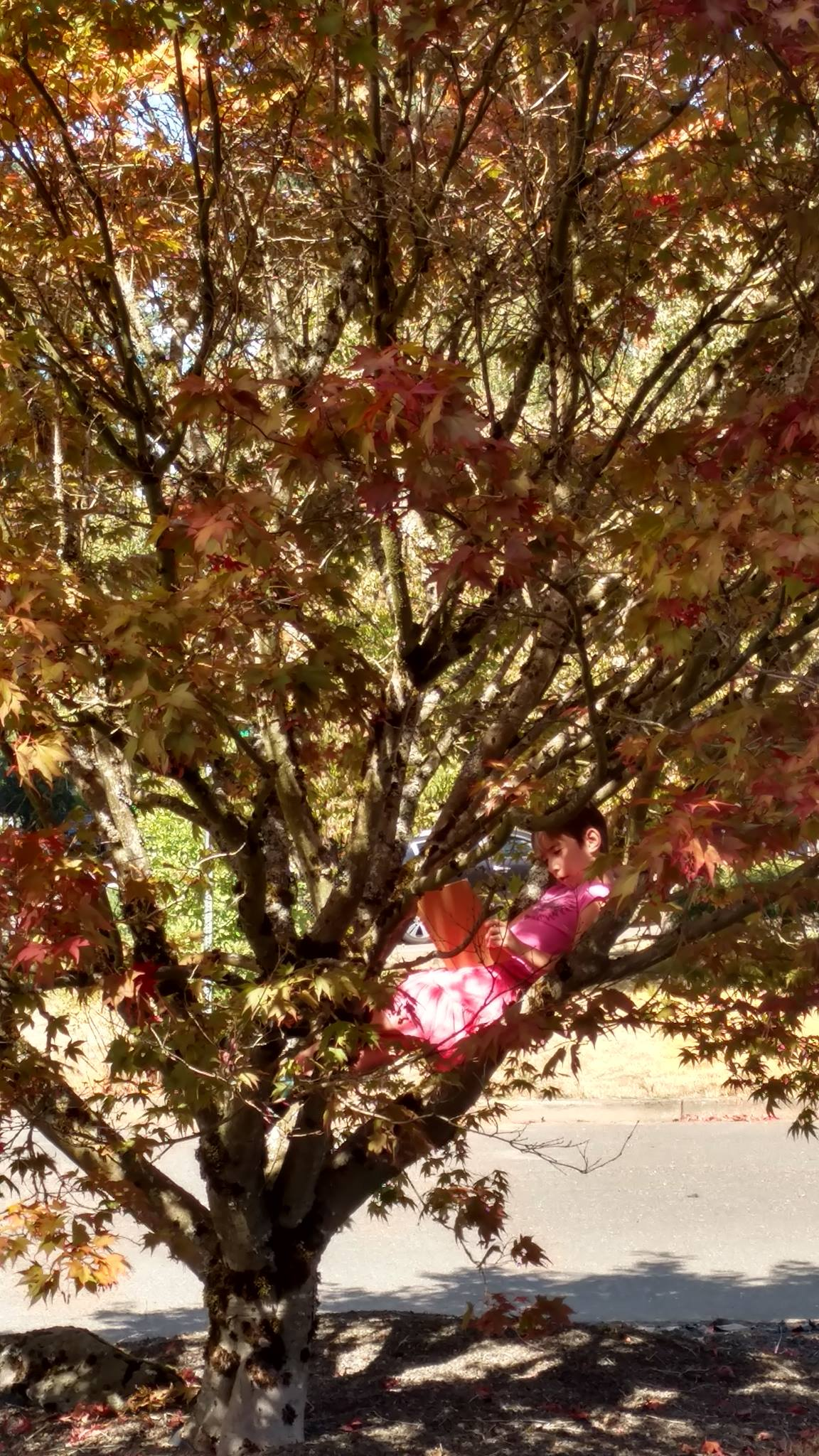 Enjoying time in a tree