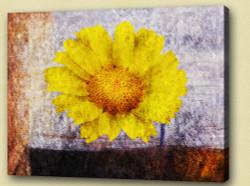 Flower,Florals, flowering plants ,mums or chrysanths,Plantae