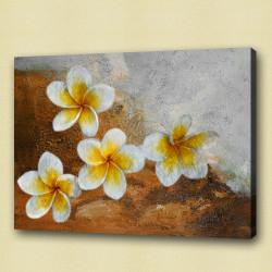 Flower,Florals, flowering plants ,Plantae,Plumeria