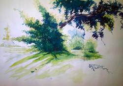 Landscape,Nature,Grass,Greenery