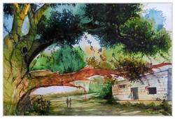 Landscape,Nature,Tree,Village life,Tree