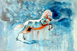 Horse,Speed,Race,Horses,Horse with Blue Bcakground,White Horse